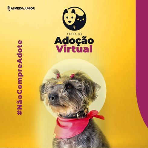 Rede de shoppings Almeida Junior promove adoção de animais virtual